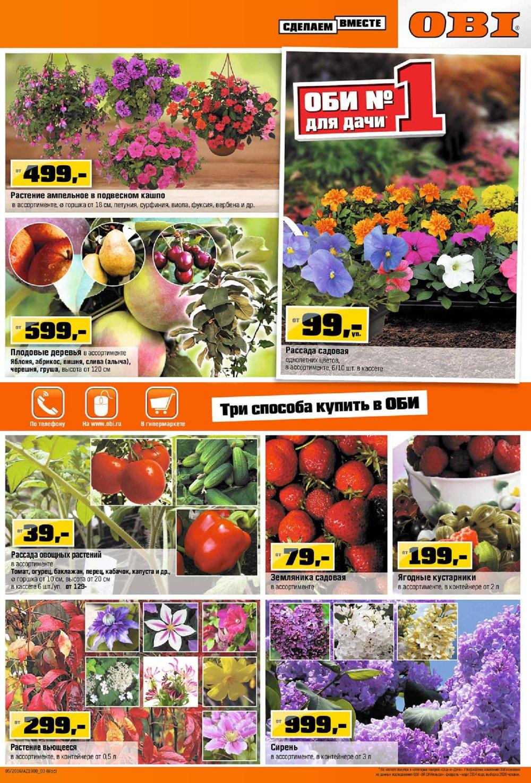 Садовые цветы и кустарники каталог