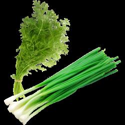 Зелень, лук; укроп