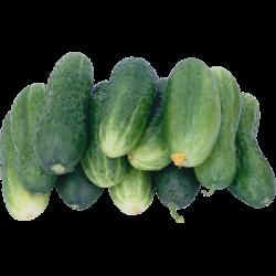 Огурцы среднеплодные