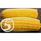 Дск Кукуруза сахарная в початках вар.1уп